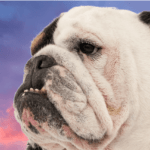 Lost Puppy Premiere